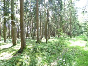 Wald Waldfläche, Gemarkung Fichtenau